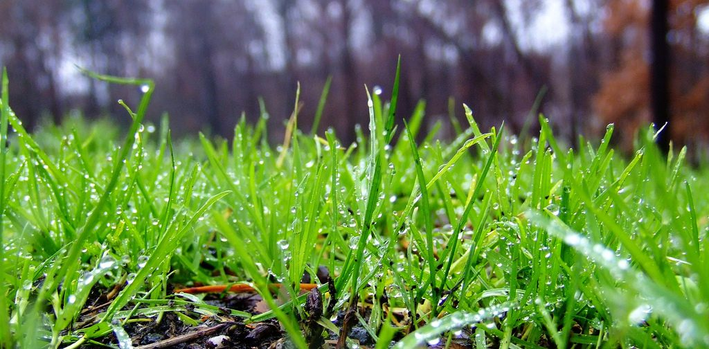 Close-up of green grass with morning dew.