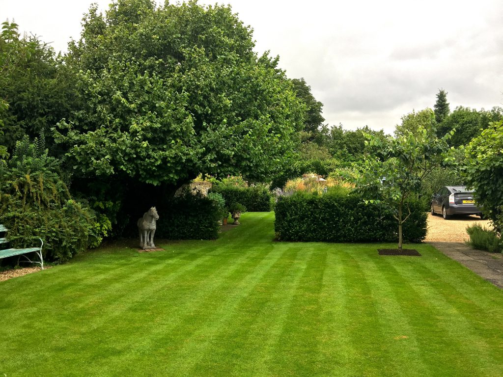 Lush green lawn with trees in the background.