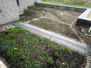 A garden with a little grass and a few plants in early spring which needs fertilization.