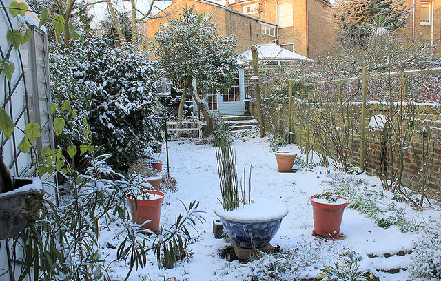 A garden during winter where all plants and trees are covered in snow.