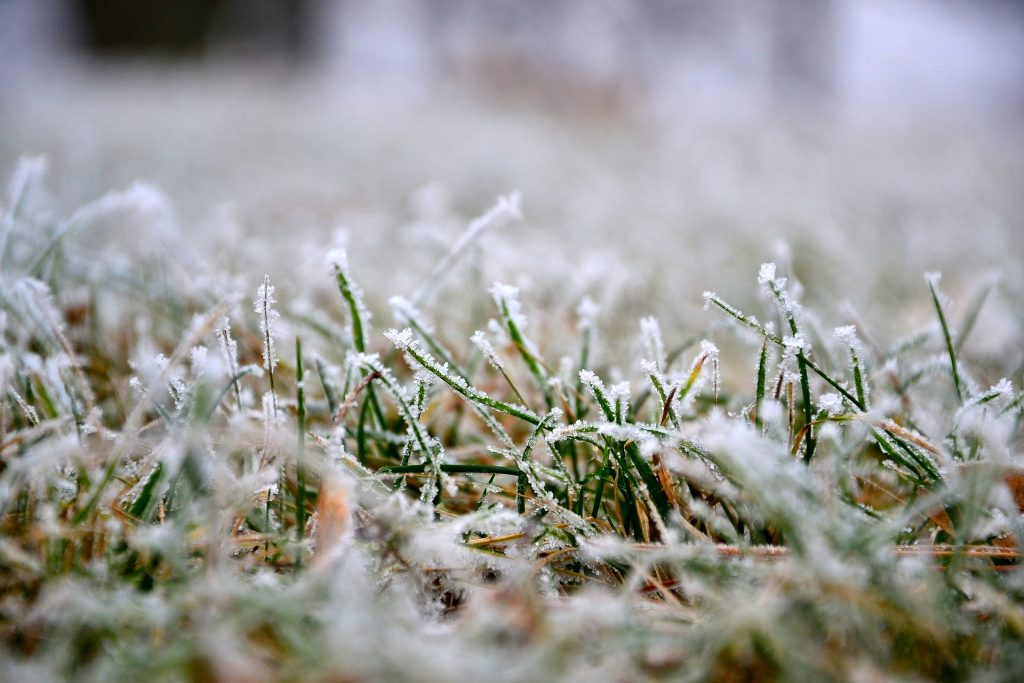 lawn-covered-with-snow
